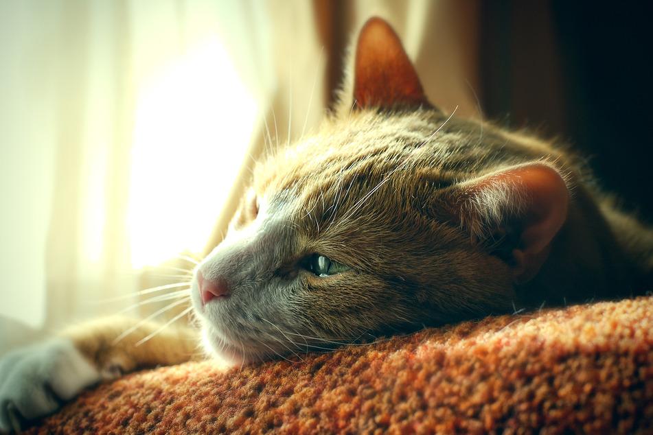 Eine Katze in Mockau wurde vermutlich Opfer eines Tierhassers. (Symbolbild)