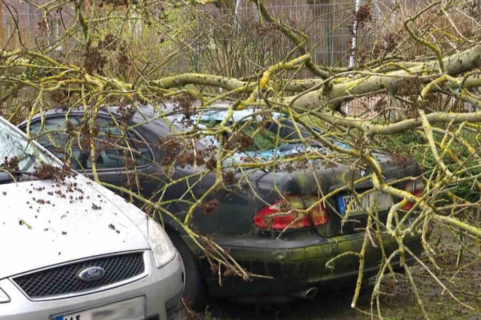 """Bäume umgestürzt, Hafen gesperrt: Sturm """"Victoria"""" hat den Norden fest im Griff"""