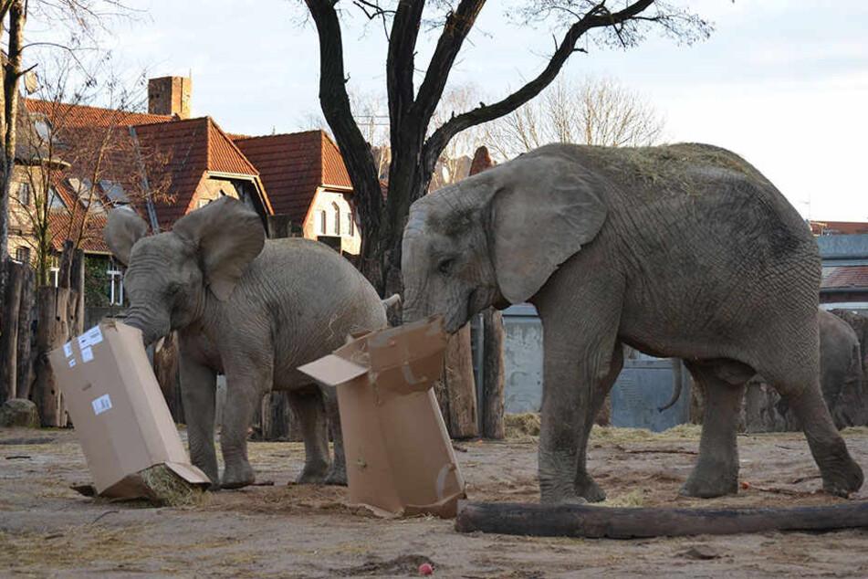 Die Bescherung der Elefanten mit Kisten und Tannenbäumen ist ein besonderes Erlebnis