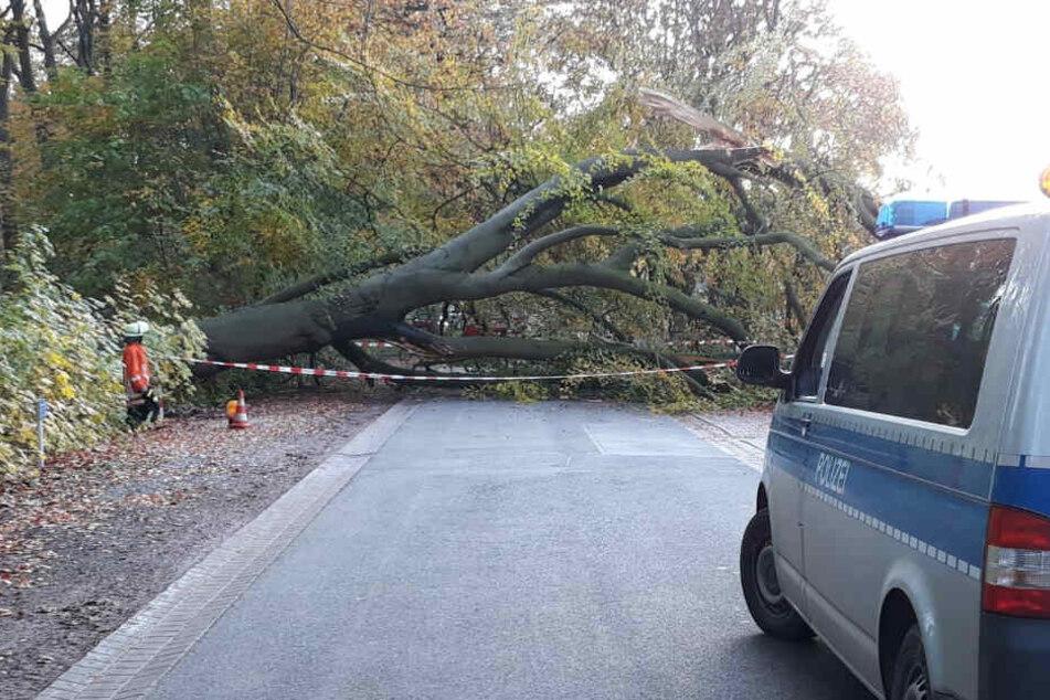 Der Baum stürzte quer über die Straße.