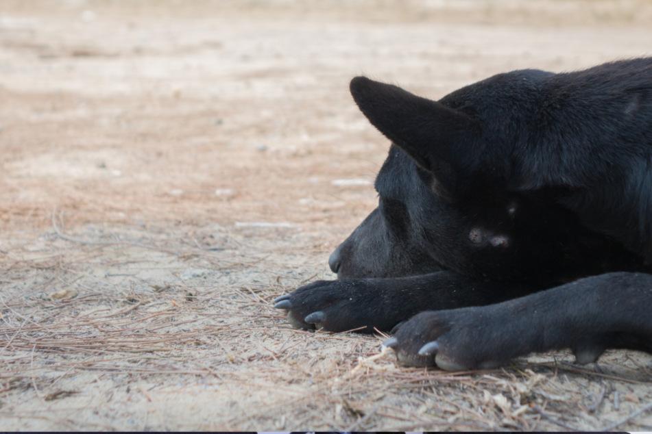 Mann erhält Video und ist schockiert, was eine Frau darauf mit seinem Hund treibt