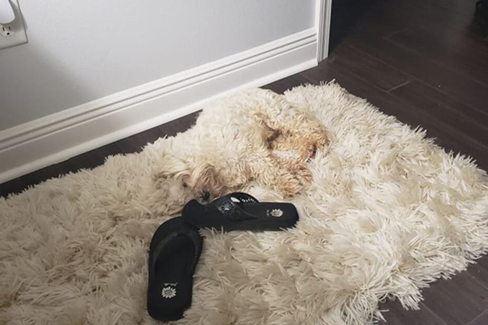 Der Hund ist scheinbar plötzlich aufgetaucht.