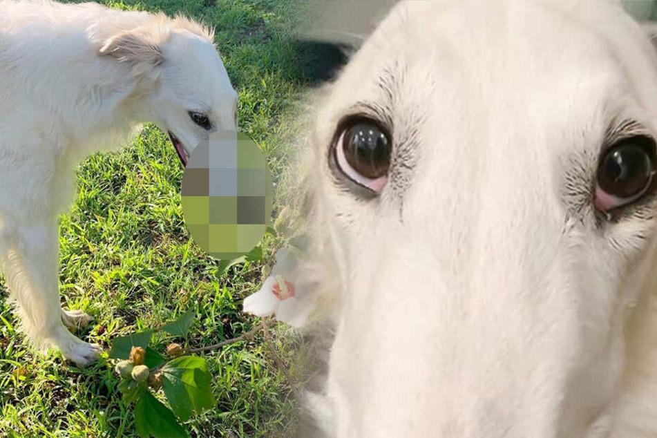 Was hat dieser Hund denn für eine komische Schnauze?