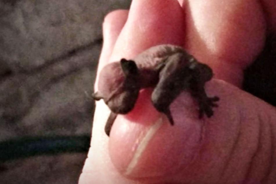 Die winzige Fledermaus wurde von der Berliner Polizei aus einem Keller gerettet.