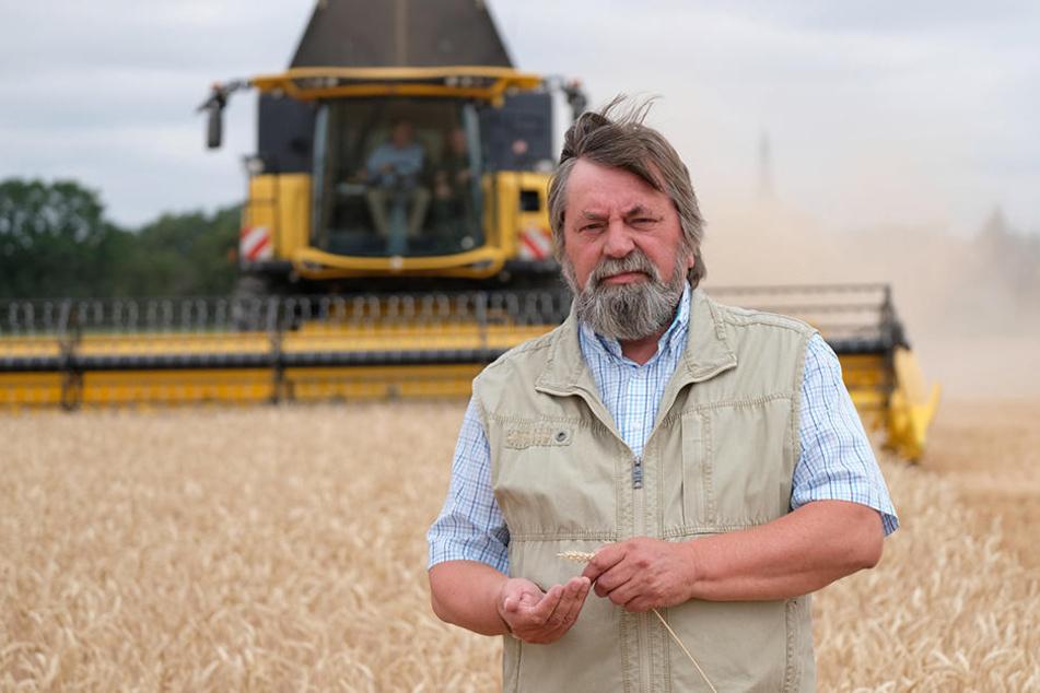 Extreme Dürre auf den Feldern: Sachsens Bauern rufen den Notstand aus!