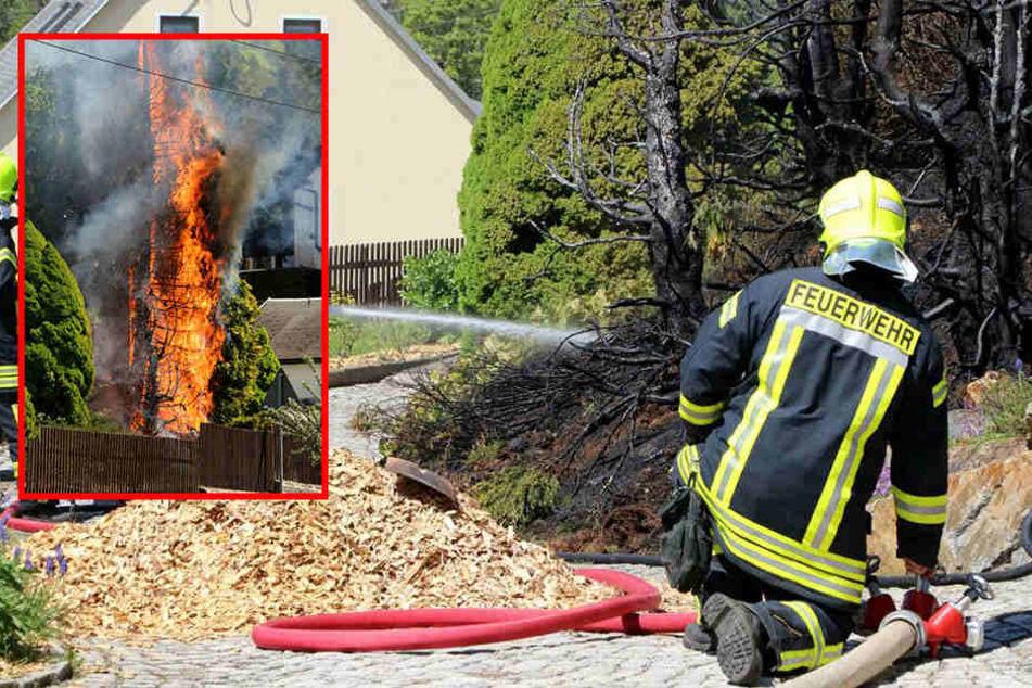 Bäume und Hecke in Flammen, Pool stark beschädigt