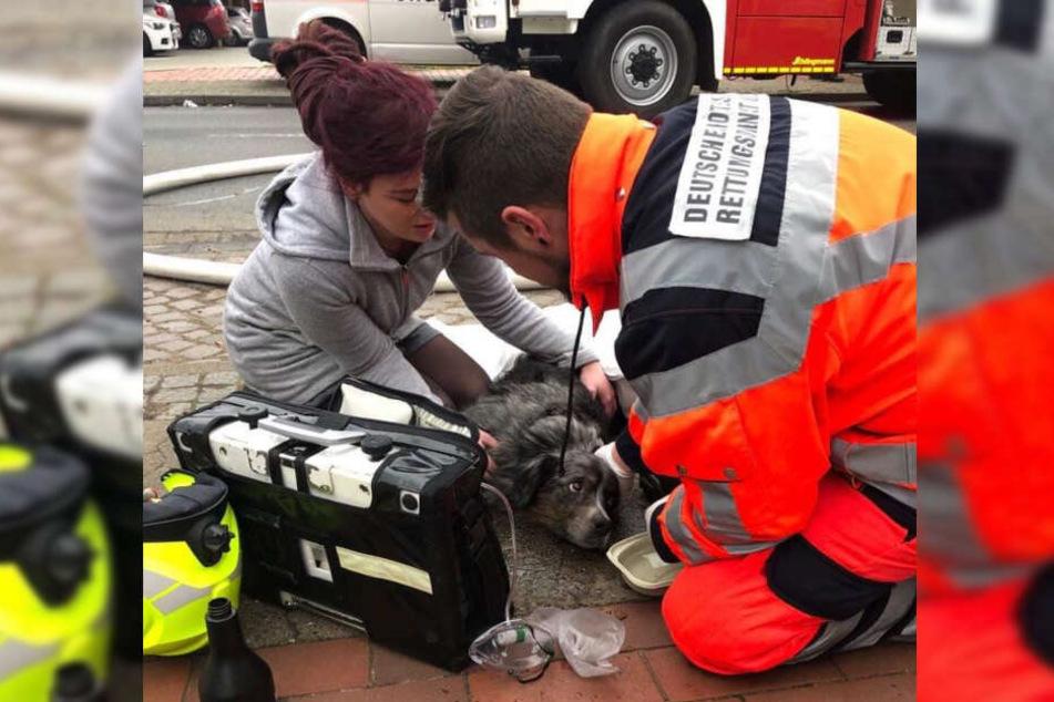 Einsatzkräfte versorgten Hündin Casey nach ihrer Rettung