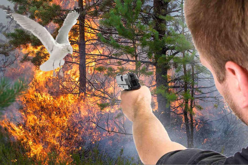 Leichtsinn oder Blödheit? Jugendliche legen Feuer und erschießen Möwe