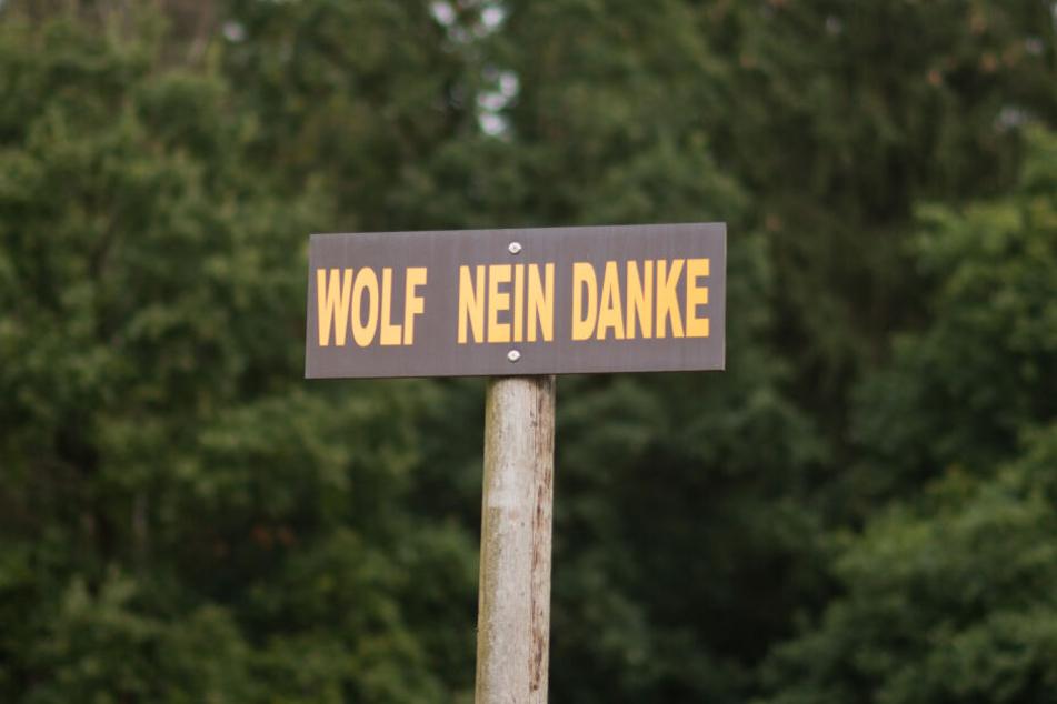 In vielen Gegenden Deutschlands gilt der Wolf als größte Gefahr für Nutztiere