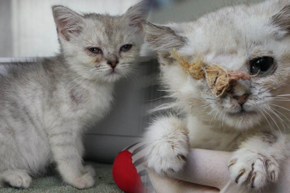 Wie herzlos: Unbekannte setzten 20 kranke Katzen aus