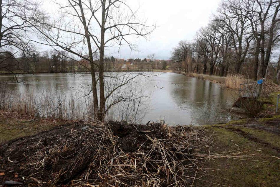 In diesem Teich neben dem Planitzer Bad wurde am Dienstag die Leiche einer Schülerin entdeckt.