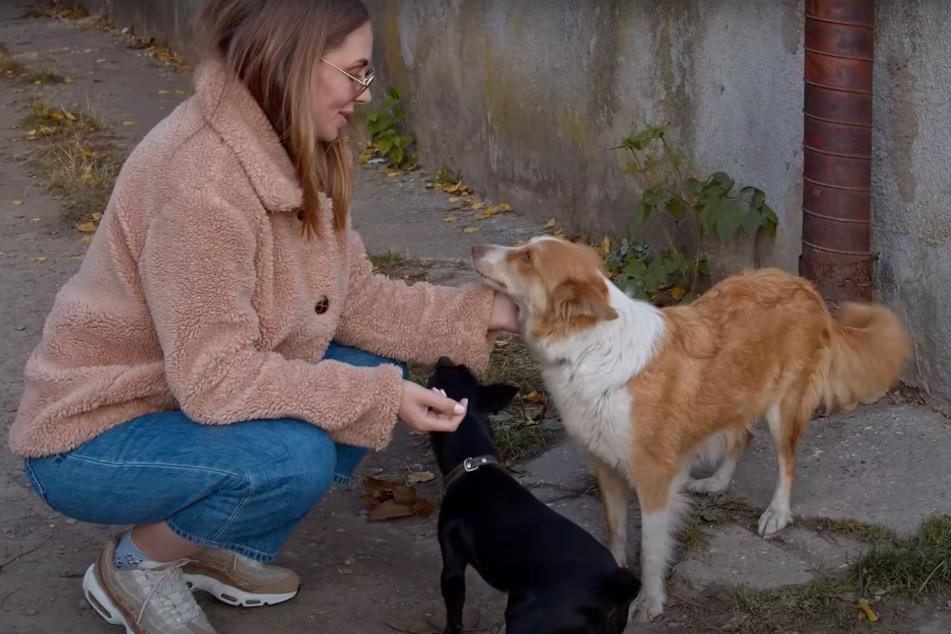 Tierschützerin Olena nahm einen ersten Kontakt zu den Hunden auf.