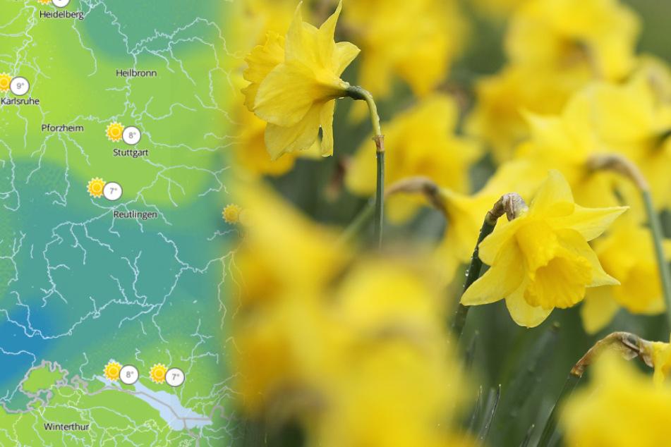Kommt der Frühling? So wird das Wetter im Ländle