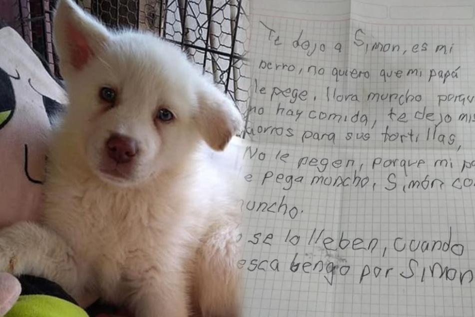 Tierheim teilt rührenden Brief, mit dem ein Junge seinen Hund zur Adoption freigibt