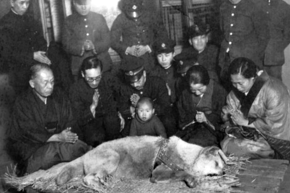 Trauer um den toten Helden: Heute vor 85 Jahren starb Hachiko als Legende.