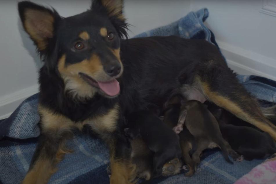 Endlich in Sicherheit: Die Hunde-Familie hat es geschafft.