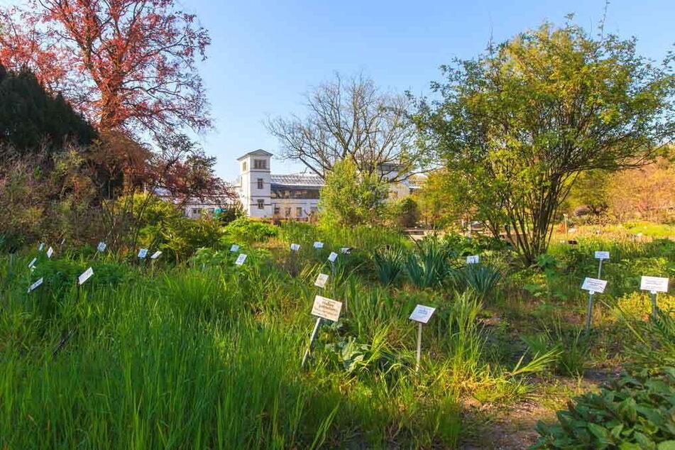 Ab dem Eröffnungswochenende soll es im Botanischen Garten zu Leipzig auch wieder kostenlose Gästeführungen geben.