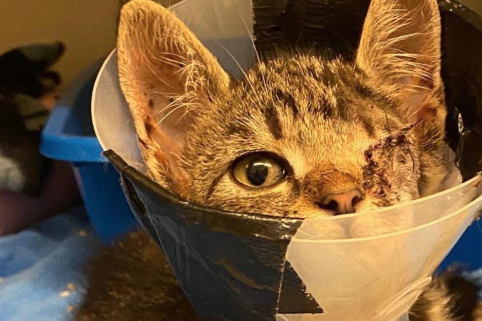 """Katze verliert Auge und ist genervt: """"Partei gegen Halskragen"""" geplant!"""