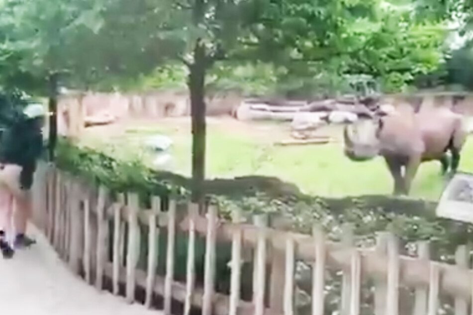 Außergewöhnliche Freundschaft: Kind spielt mit Nashorn!