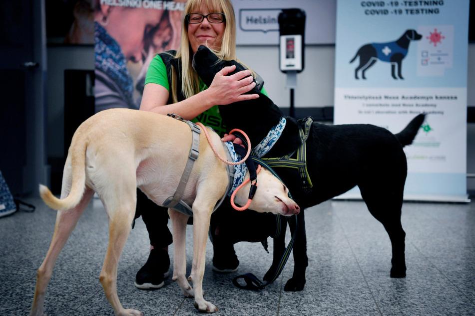 Auch das gehört dazu: Nach getaner Arbeit werden die Covid-19-Spürhunde K'ssi (l.) und Miina zur Belohnung von einer Betreuerin gestreichelt.
