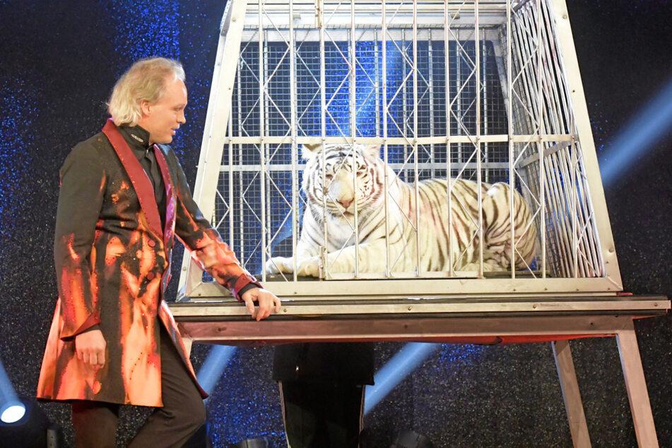 André Sarrasani (47) und seine Tigerdame Kaya (7). Die Raubkatze muss sich einer strengen Beobachtung unterziehen.