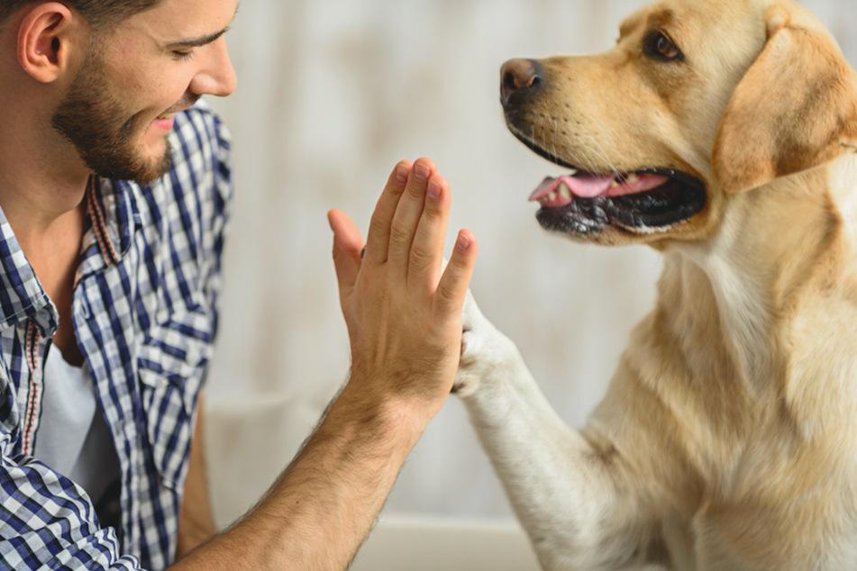 Ein ausgeglicheneres Verhältnis macht Hund und Halter zufrieden. (Symbolbild)