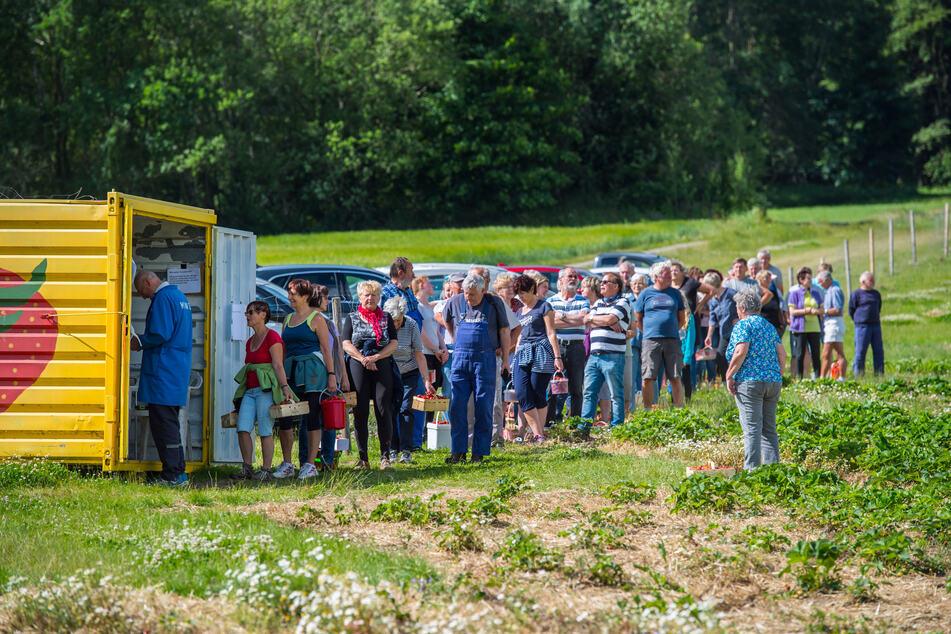 Am Kassen-Container des Erdbeerfelds in Lauter-Bernsbach standen Selbstpflücker bis zu 45 Minuten lang. Ein Kilo kostet um die vier Euro.