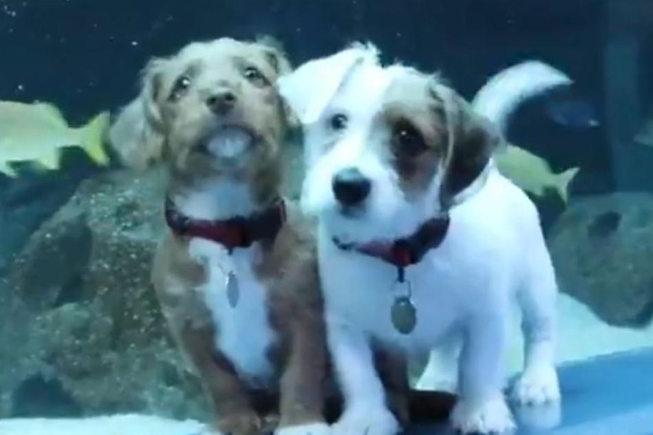 Carmel und Odie auf großer Tour.