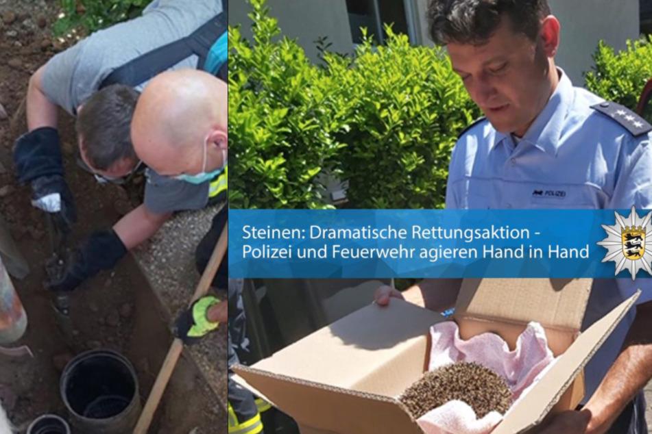 Igel steckt in Rohr fest: Polizei rettet Eddy