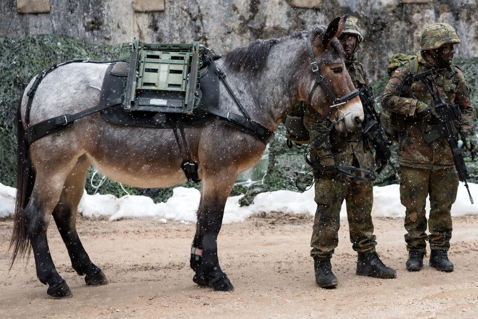 Einzigartig in Deutschland: Hier bereitet die Bundeswehr Tiere für den Einsatz vor