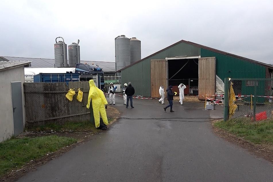 In einem Landwirtschaftsbetrieb in Sachsen-Anhalt ist die Vogelgrippe ausgebrochen.