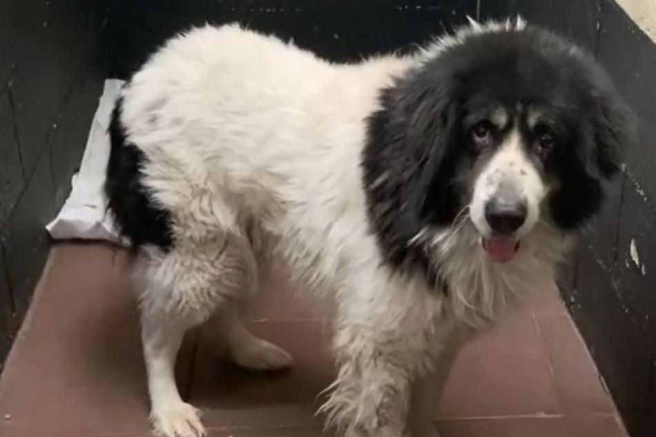 Tierheim erntet böse Kommentare, weil es Hund auf Boden schlafen lässt, doch der wahre Grund ist viel trauriger