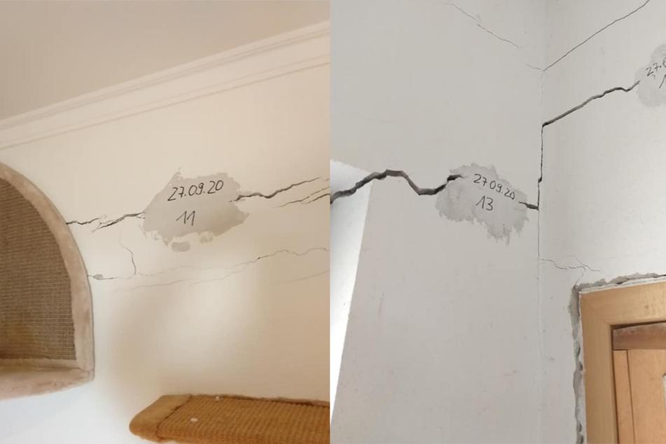 Die Wände des Tierheims weisen tiefe Risse auf.