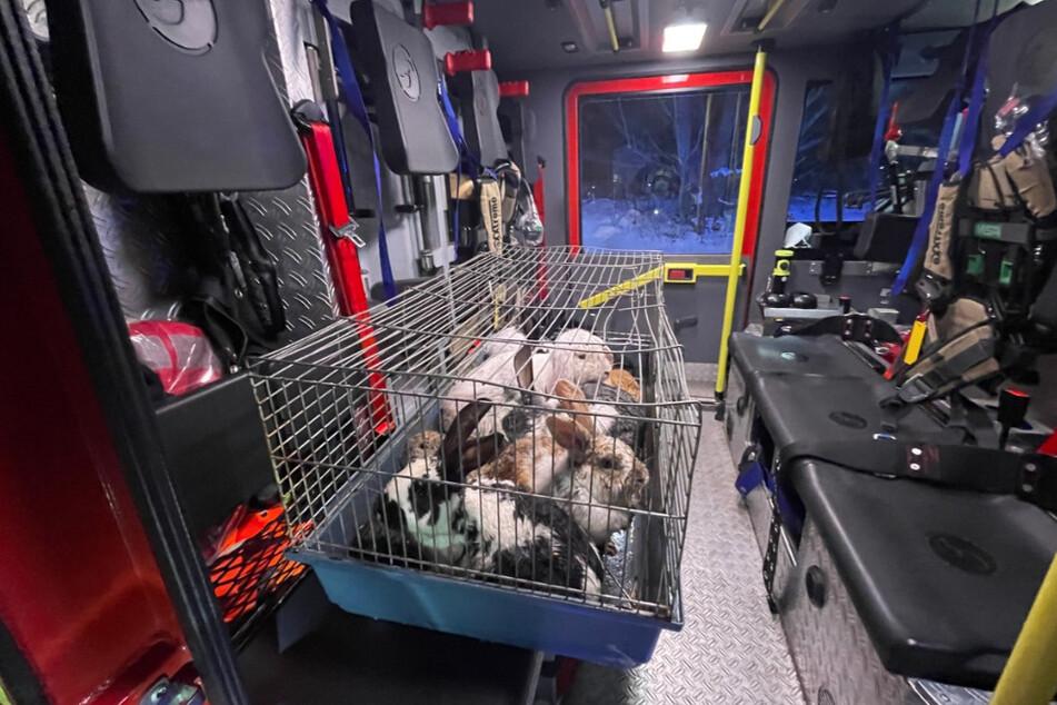 Die Kaninchen und die Taube konnten gerettet werden.