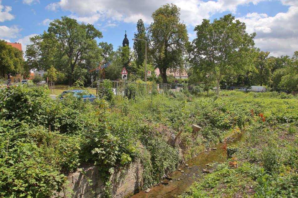 Ab Herbst soll der Kaitzbach renaturiert werden.