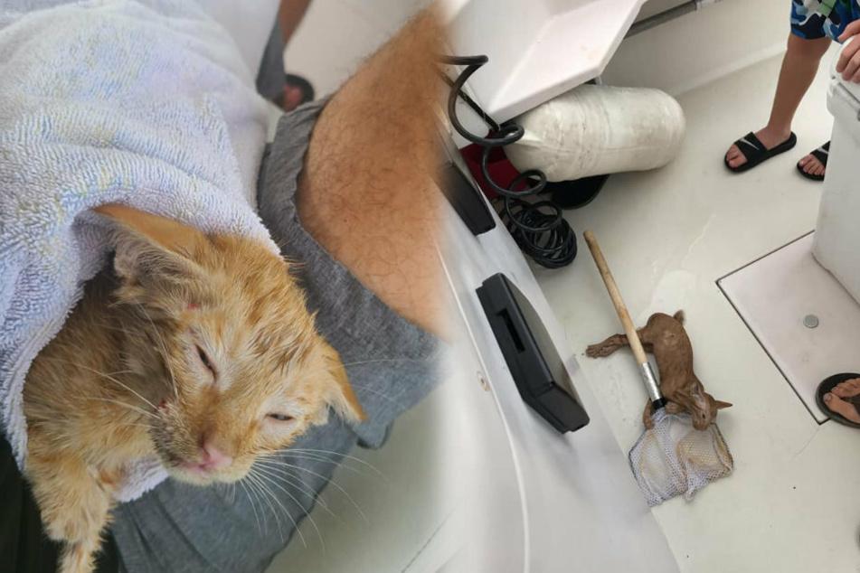 Die Fischer retteten das durchnässte Kätzchen mit einem Kescher aus dem Meer.