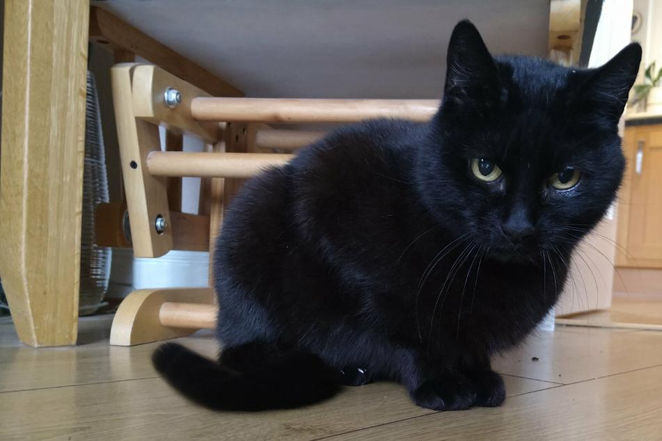 Katze wird vier Jahre lang vermisst: Dann kehrt sie zu ihrer Familie zurück!
