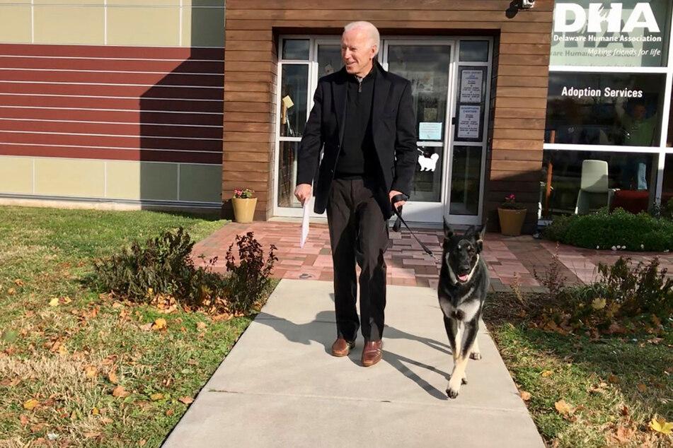 """US-Präsident Joe Biden (78) hat seinen Deutschen Schäferhund """"Major"""" 2018 aus einem Tierheim geholt."""