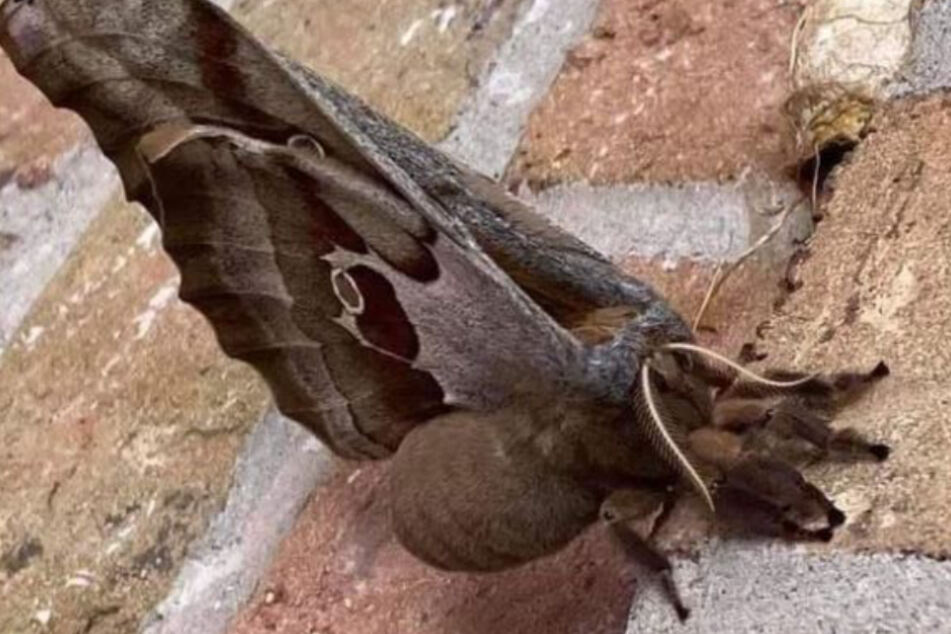 What is this winged nightmare? Picture of strange creature terrifies social media users