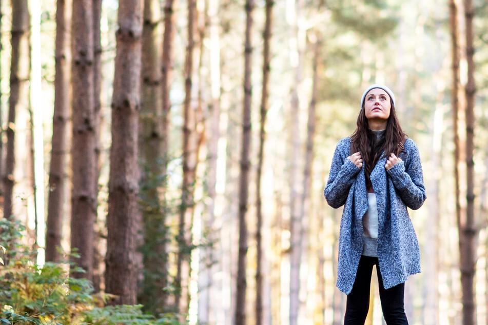 Sachsen plant den Wald der Zukunft