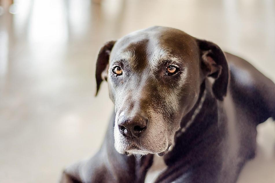 Many factors influence a dog's average lifespan.