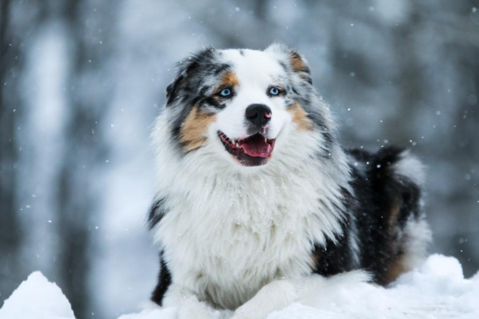 Auer Oberschule will Schulhund anschaffen