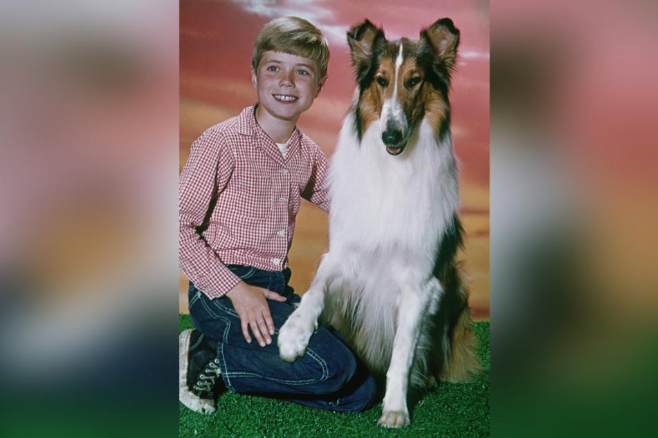 Filmhund Lassie mit seinem Freund Timmy, gespielt von Jon Provost (undatierte Aufnahme).