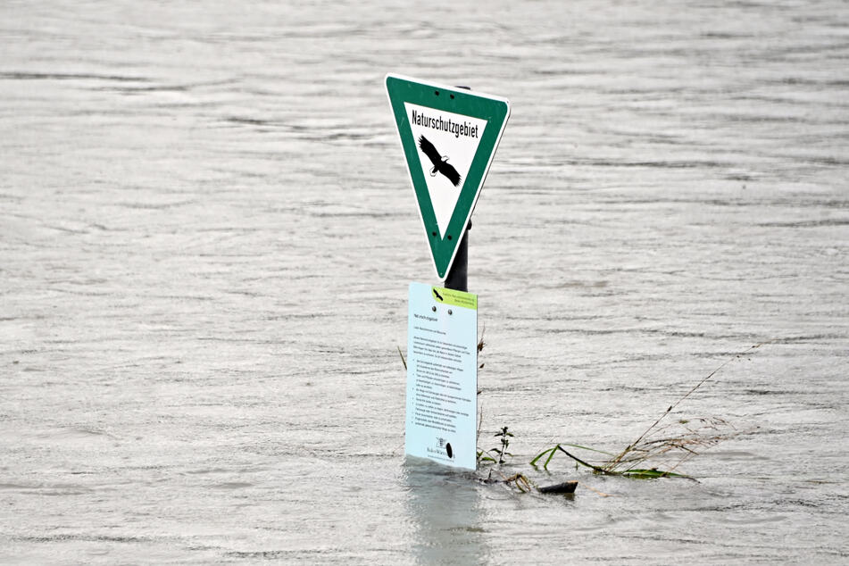 """Hochwasser in Karlsruhe: Am Rhein ragt ein Schild aus dem Wasser, auf dem steht """"Naturschutzgebiet""""."""