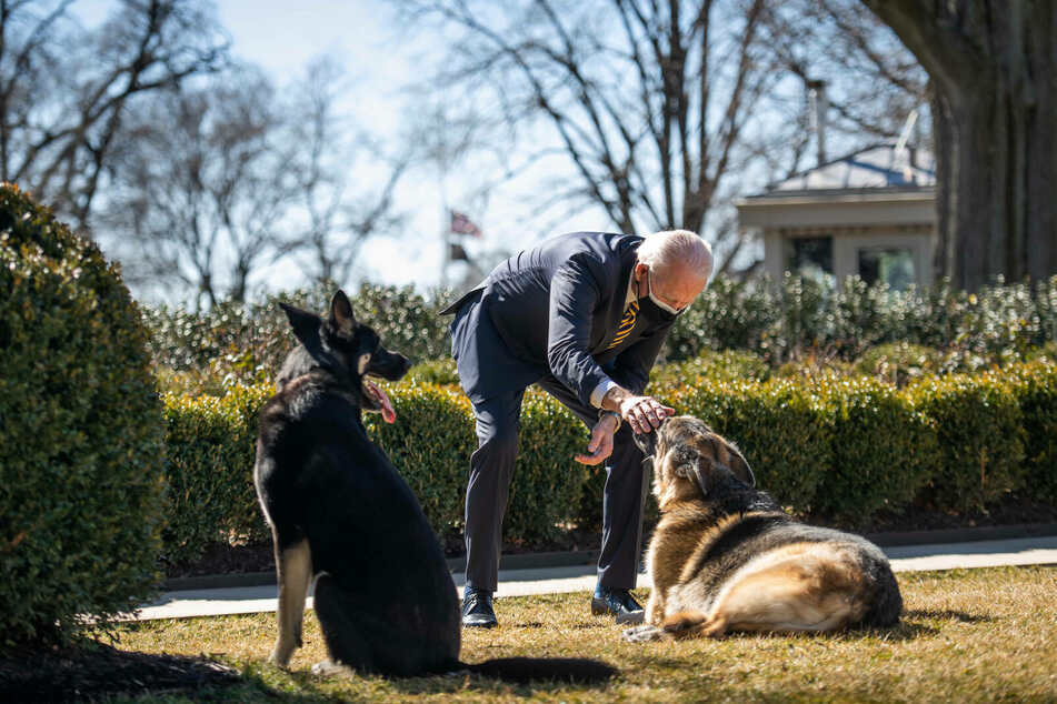 The presidential pups are back in the White House!