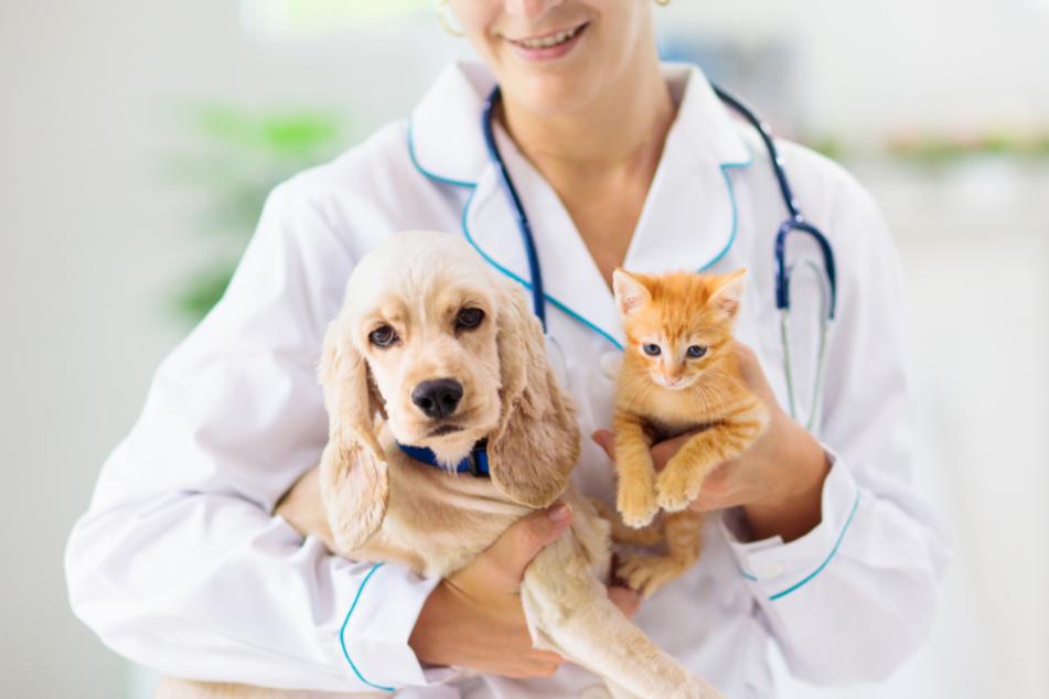 Mit Corona infizierte Haustiere müssen künftig den Behörden gemeldet werden.