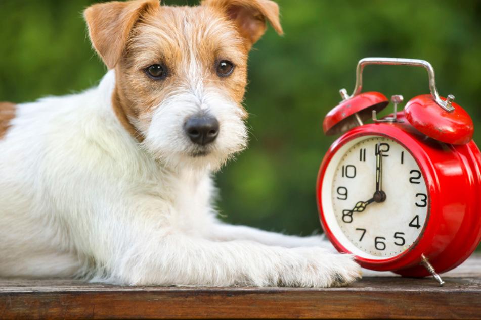 Haben Hunde echt ein Zeitgefühl oder bilden wir uns das nur ein?