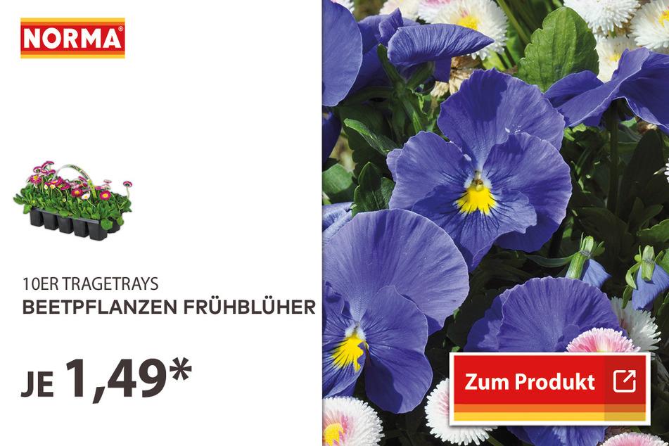 Beetpflanzen Frühblüher für 1,49 Euro.