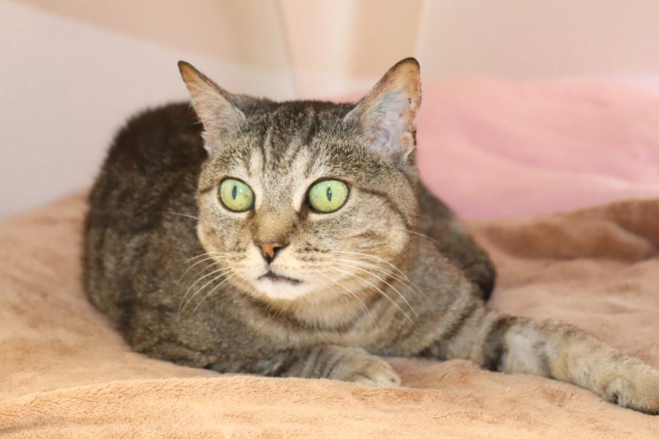Katze Camilla.