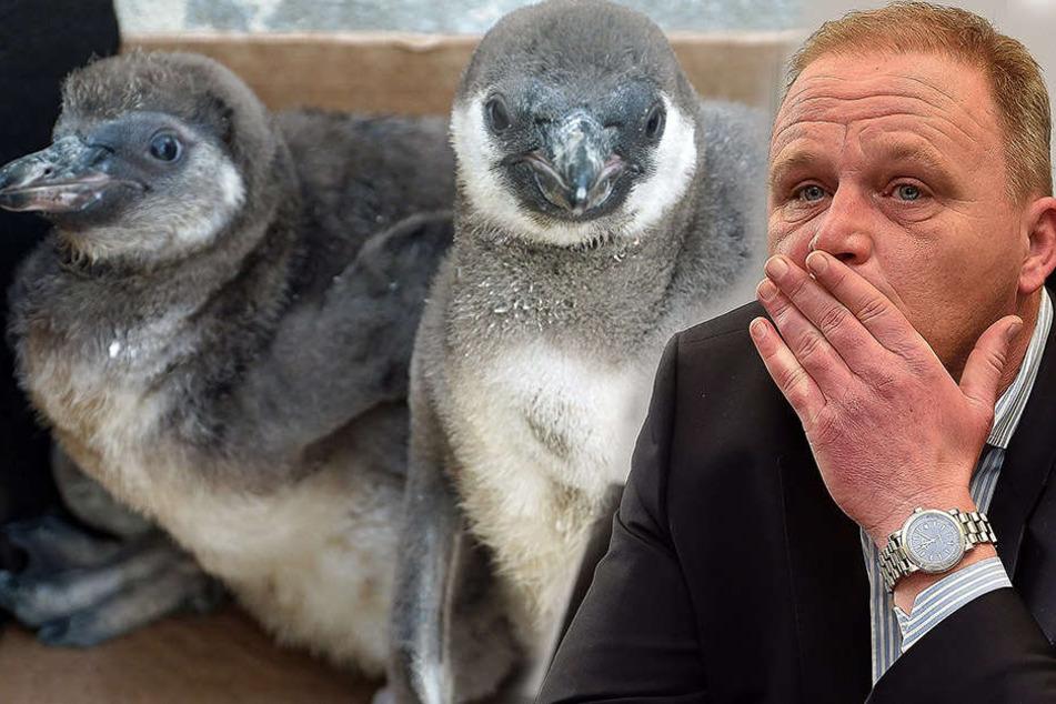 Pinguin-Sterben im Zoo Dresden: Haben Pfleger einen Fehler begangen?